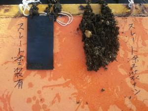 船底・放水口・水槽などに付着する貝と藻の防止する
